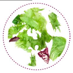 Verschiedene Salatsorten in einer Collage