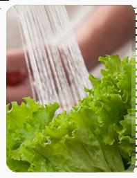 Salatkopf unter einem Wasserstrahl