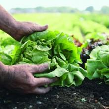 Nachhaltigkeit bei Florette