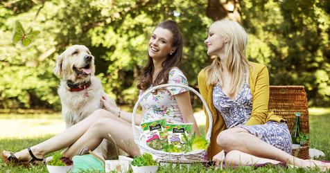 Glückssalat im Picknick-Bild finden