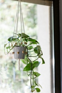 Deko-Tipps für ein grünes Zuhause DIY Florette